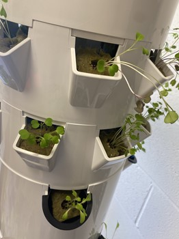 WCMS Tower Gardens growing plants